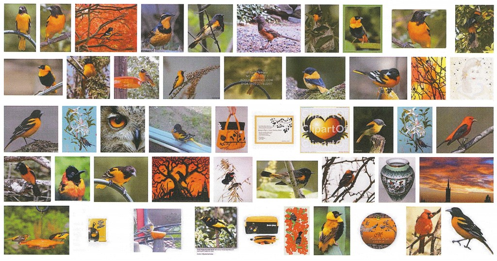 "Screen shot of image search for ""orange and black birds."""