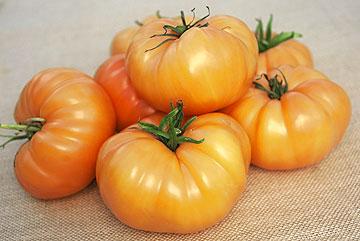Orange colored Kellogg Beefsteak tomatoes. Source: Urban Farmer