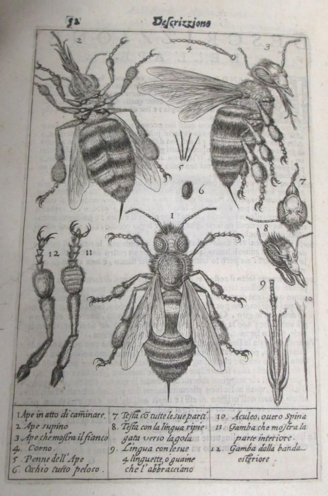 Illustration of three bees.