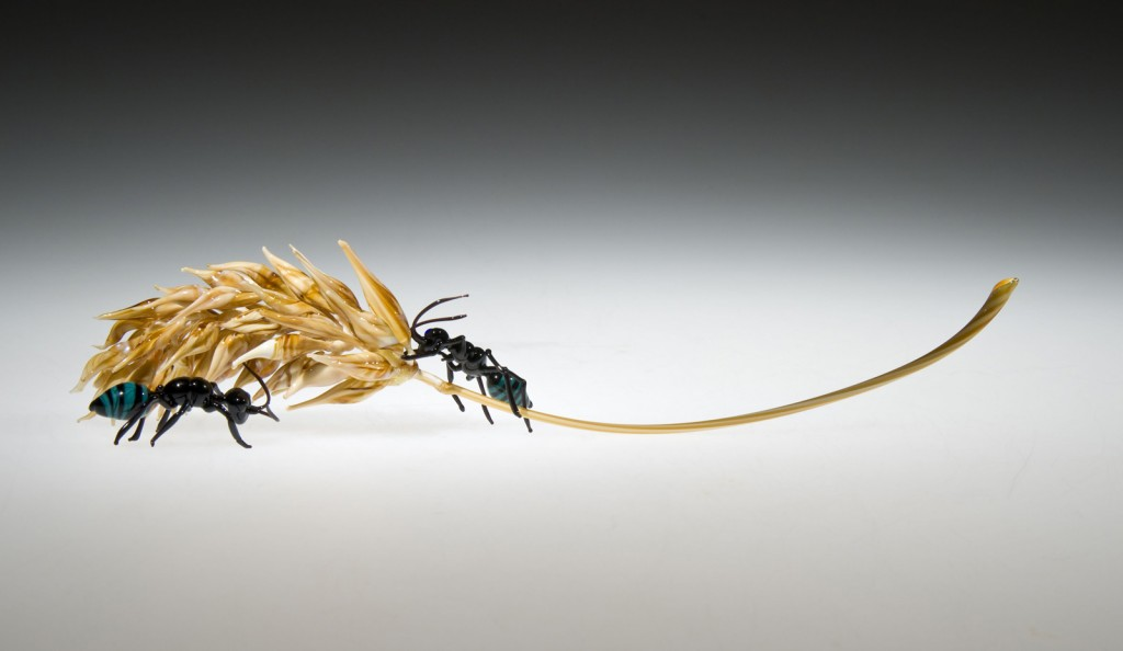 Allison Duncan. Ants and Wheat 2013