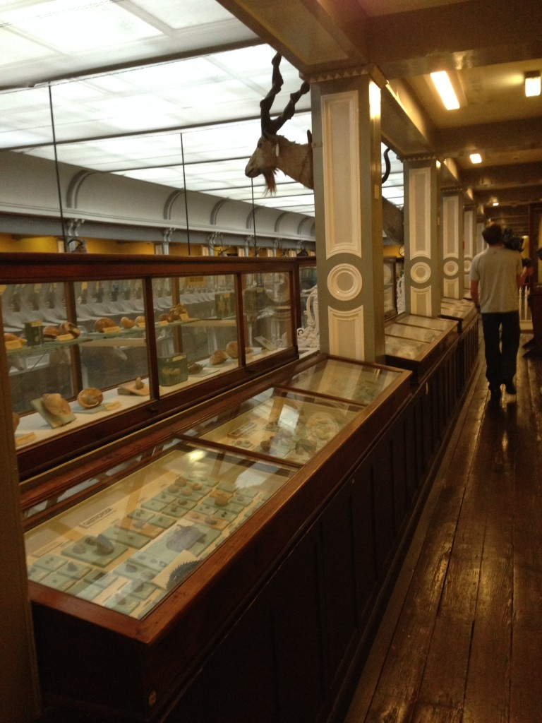 The National Museum of Ireland - Natural History museum is home to 300 models of glass sea creatures by the Blaschkas