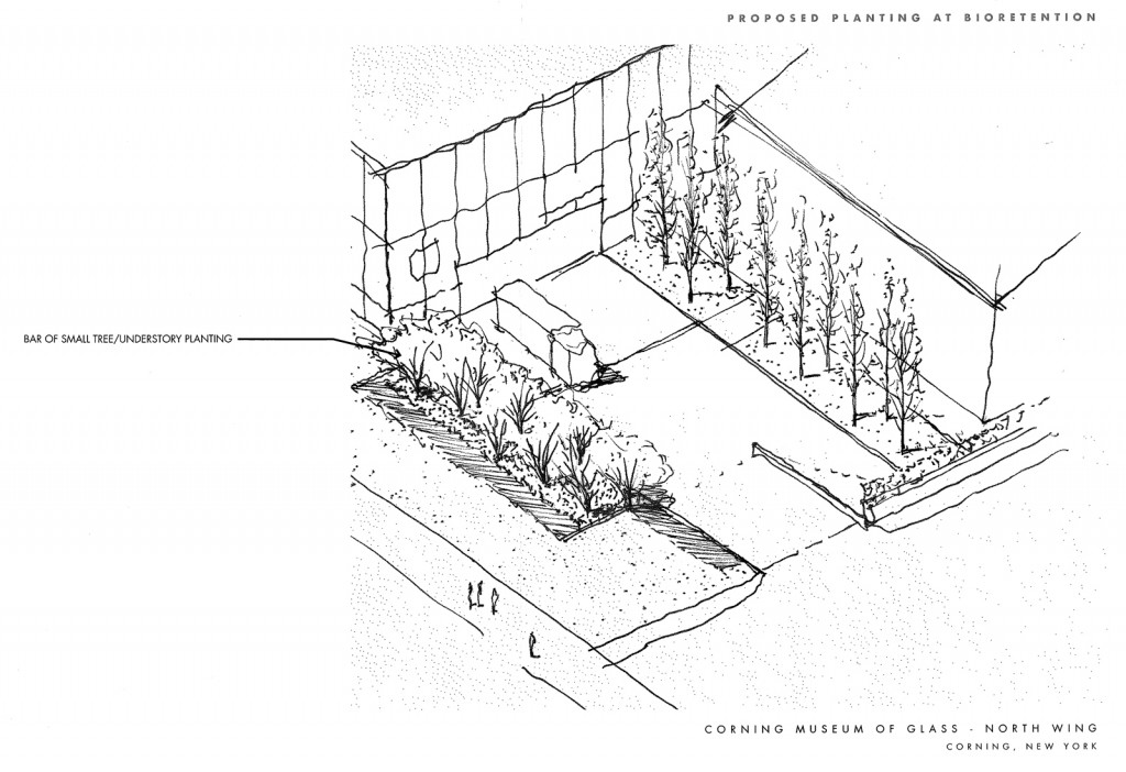 Sketch of the plants to be planted in the bioretention area by the Museum's loading dock