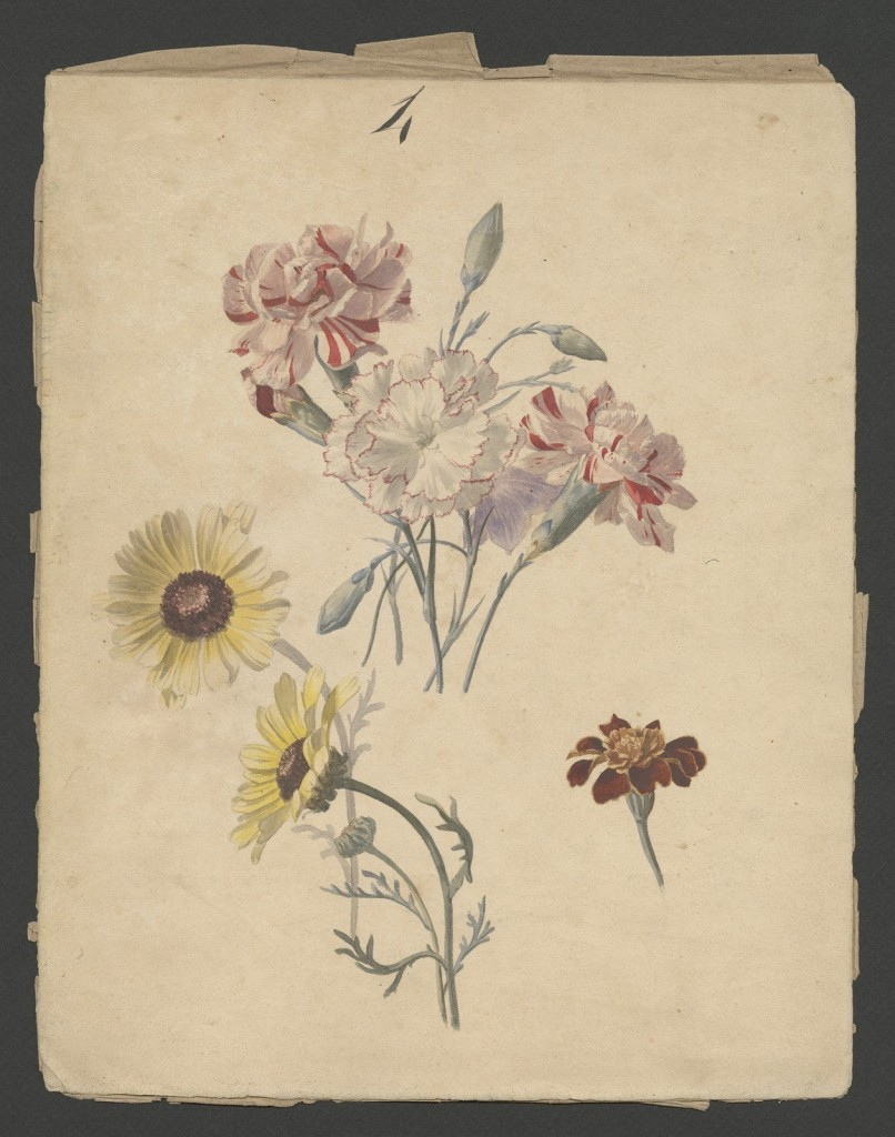 Daisy. Nicolas, Paul, Établissements Émile Gallé. Nancy, France, 1897. Purchased with funds from the Fellows. 2014.3.4.