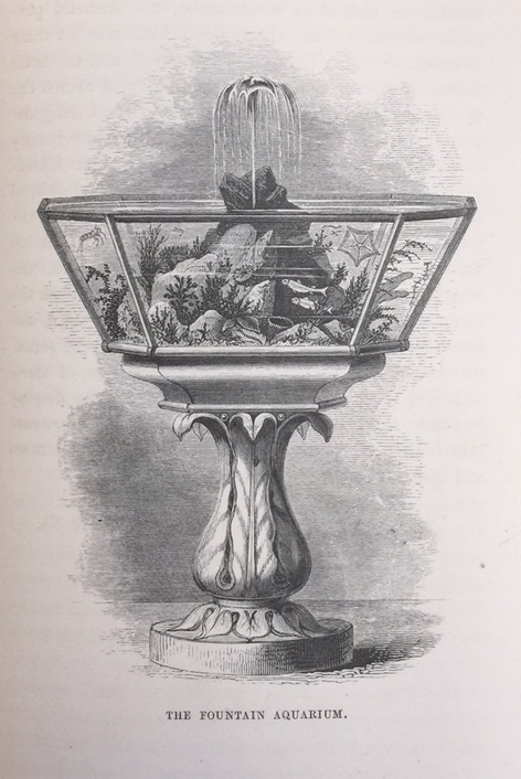 Black-and-white engraving of aquarium
