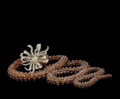 Specimen of Blaschka Marine Life: Synapta glabra (Nr. 284), Leopold and Rudolf Blaschka, Dresden, Germany, 1885. Lent by Cornell University, Department of Ecology and Evolutionary Biology. L.17.3.63-20.