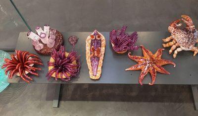 Prototypes for Vitreous Aquarium