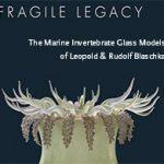 Fragile Legacy: The Marine Invertebrate Glass Models of Leopold and Rudolf Blaschka