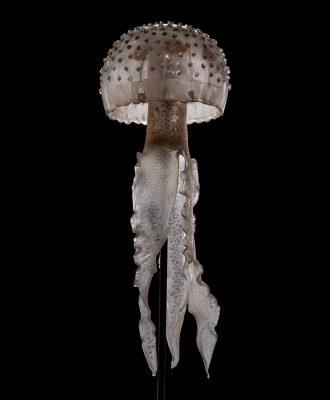 Blaschka Nr. 236, Pelagia tuberculosa (1885); [unknown] (2016)