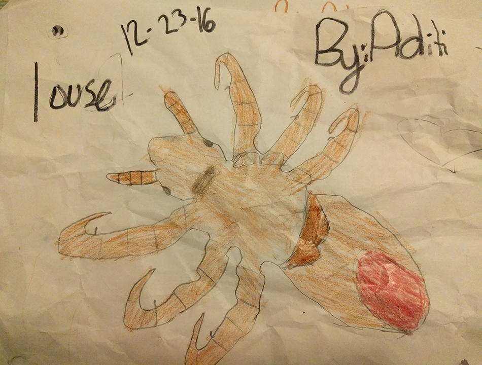 Aditi's drawing of a louse based on what she saw through the Foldscope.