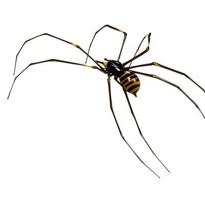 Spider Vittorio Costantini (Italian, b. 1944), Venice, Italy, about 1985-1989. 86.3.66 G.