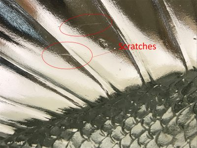 Closer view of small (1-2 cm) scratches noted on the fish's fin.