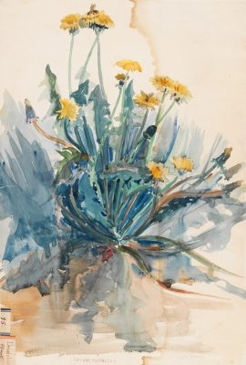 Dandelions watercolor