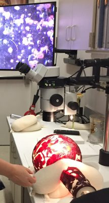 The white and red vase is carefully placed on it's side and examined by microscope. The close up is shown on a screen in the background.